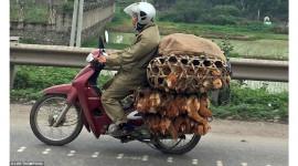 Tây ngỡ ngàng với xe máy ở Việt Nam