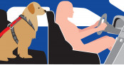 Lời khuyên khi chở vật nuôi trên xe