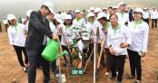 Toyota Việt Nam đồng hành cùng Tết trồng cây Xuân Kỷ Hợi 2019