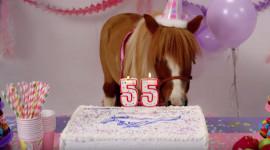 Chevrolet dí dỏm mừng sinh nhật Ford Mustang bằng… Camaro