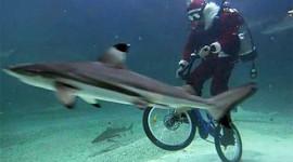 Du lịch dưới biển bằng xe đạp