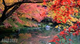Ngỡ ngàng ngắm mùa thu Nhật Bản
