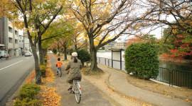 """Những """"thành phố xe đạp"""" ở châu Á"""